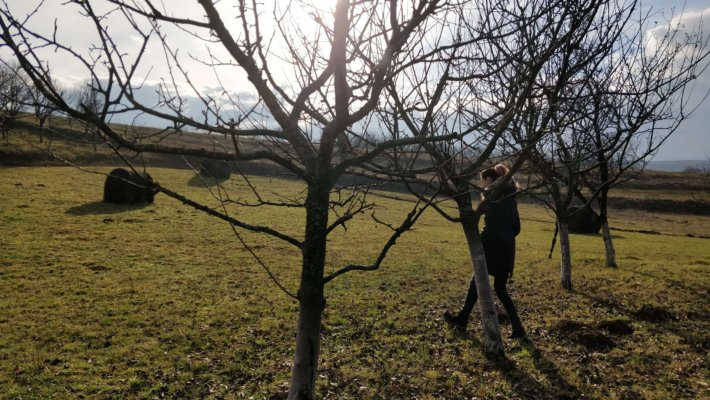 girl walking through a homestead orchard in early spring