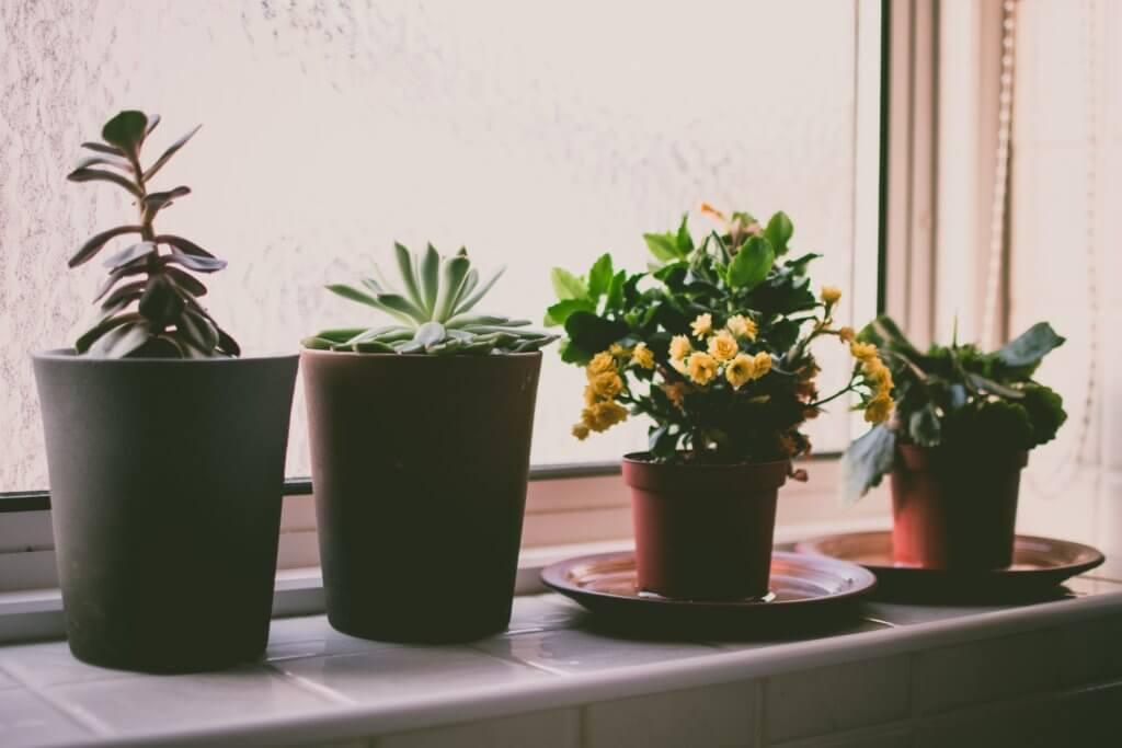 Beautiful indoor plans for beginners