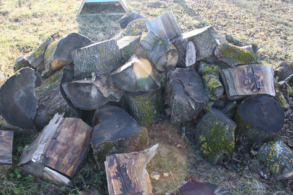 ash firewood logs