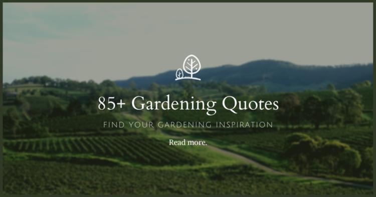 85+ Best Gardening Quotes for Gardeners