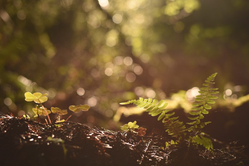 Macro forest floor soil biodiversity
