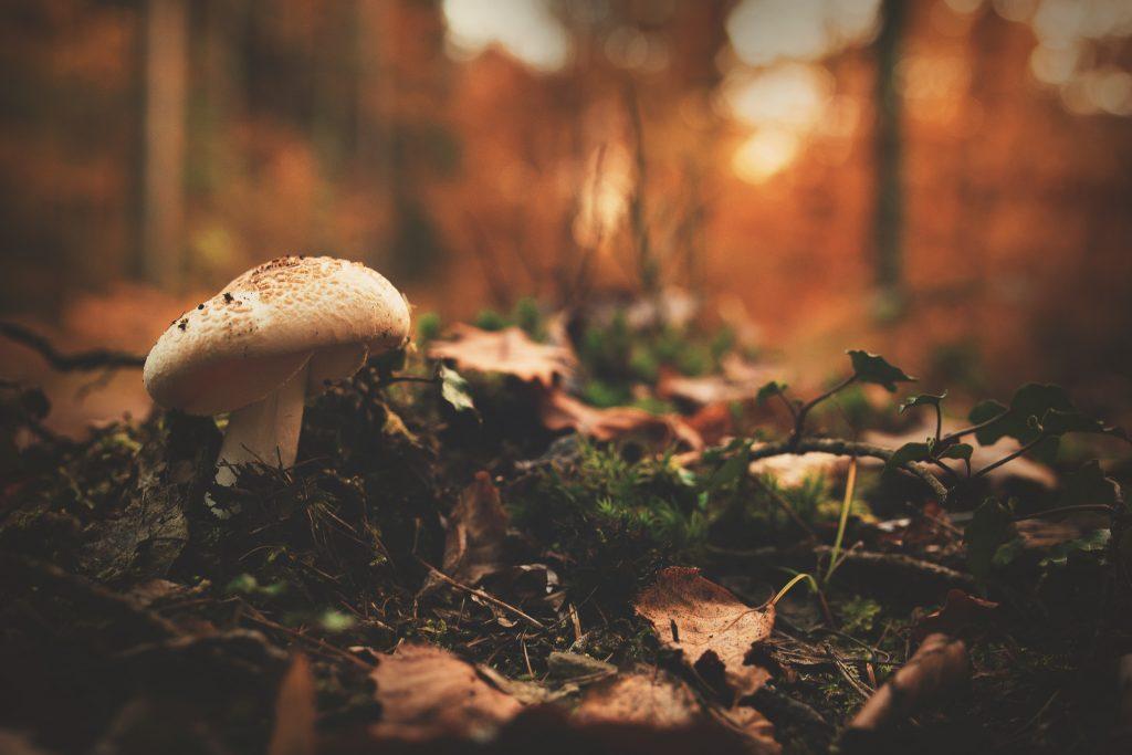 mushroom growing in food forest soil