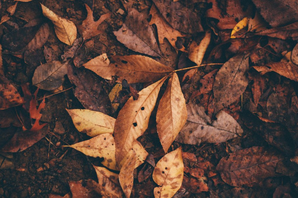 Forest leaves on ground