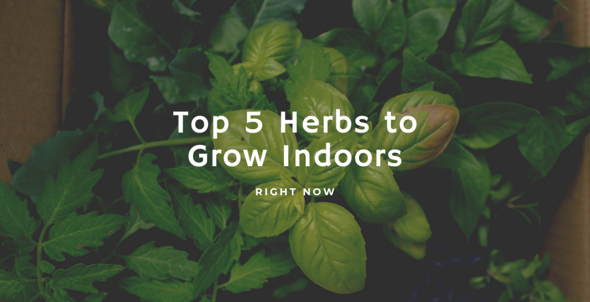 Top Herbs to Grow Indoors