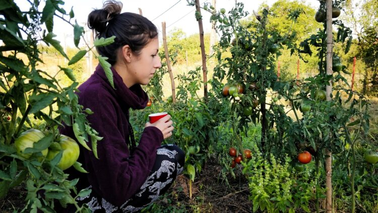 Planning the garden