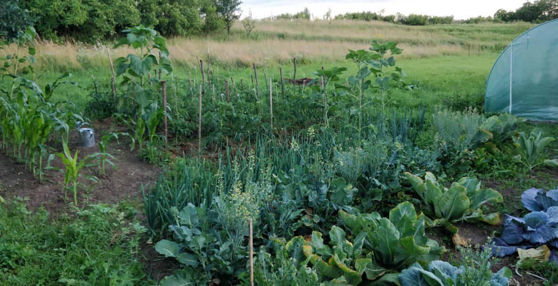 garden layout zone 7